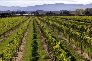 Dry River Vineyard