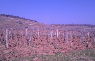 The Vineyards Of Romanee-Conti