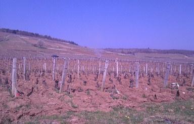 The Vineyards Of Romanee-Conti