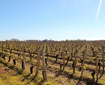 Vineyards at Cheval Blanc