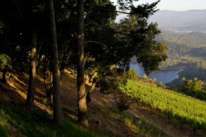 Howell Mountain Vines