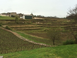 Looking out at some vineyards of St. Emilion from Chateau Barde-Haut